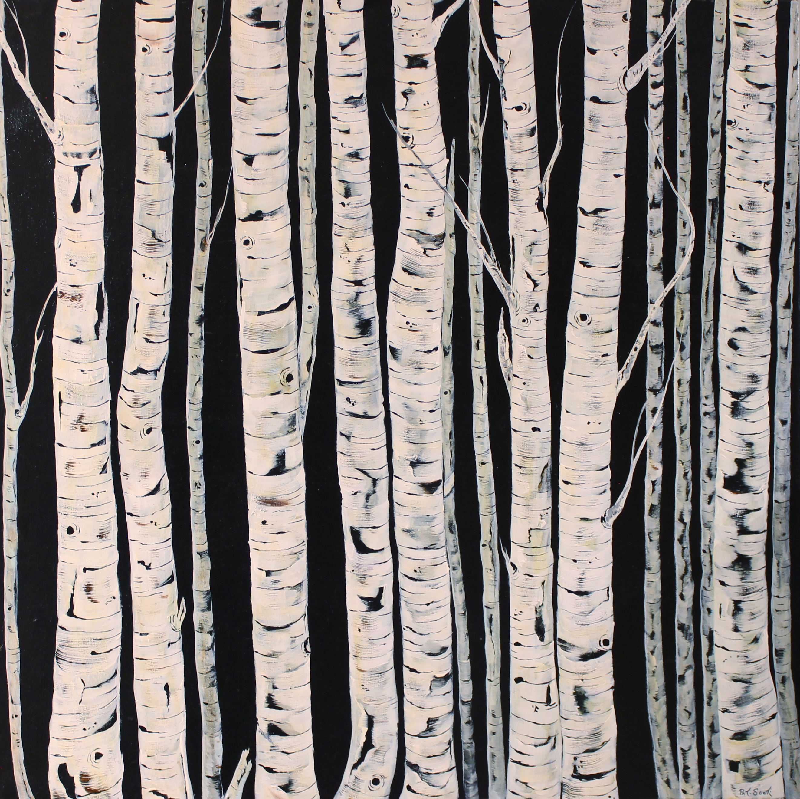 birch trees acrylic painting deep canvas 40 by 40 pat