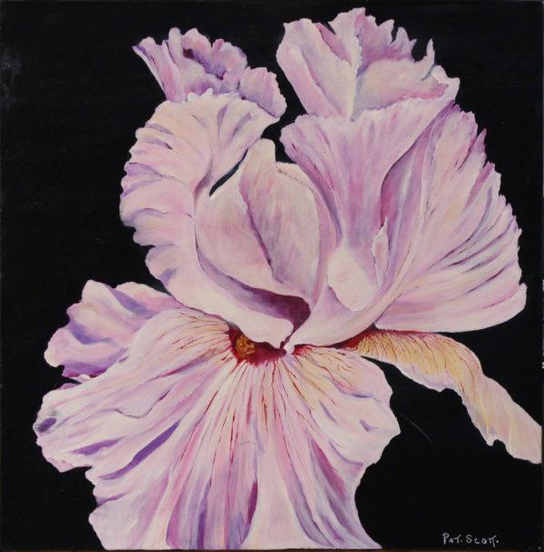 Mauve Iris Acrylic painting 2' x 2'