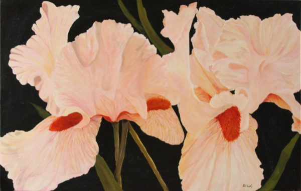 Pink Iris acrylic painting deep canvas