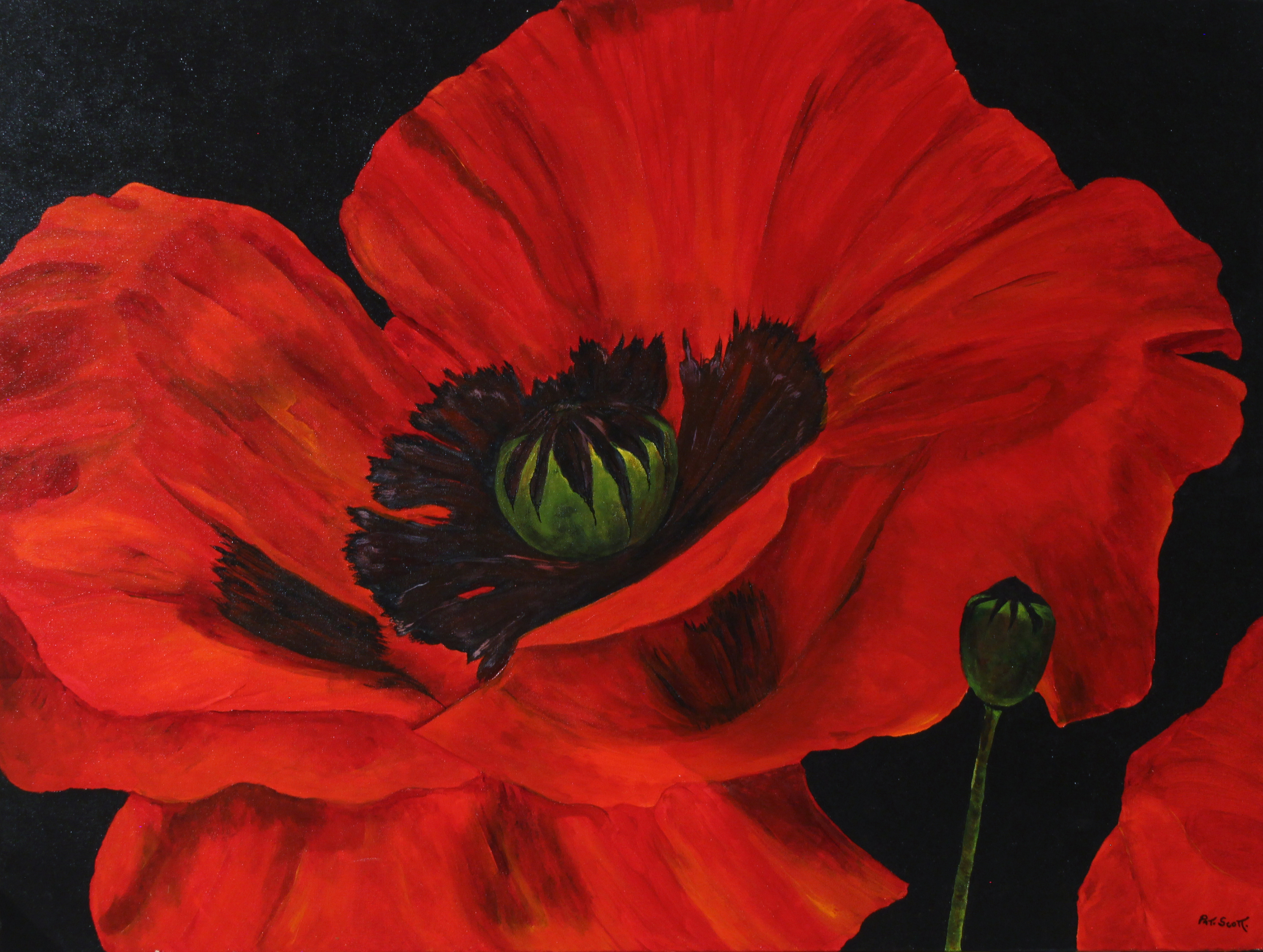 Red Oriental Poppy Acrylic Painting Deep Canvas 30 By 40