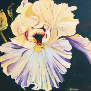 Yellow and Mauve Iris deep canvas