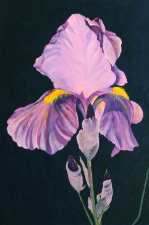 Purple Iris acrylic painting deep canvas