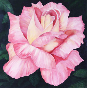 Pink Rose Acrylic painting deep canvas 3' x 3'